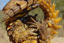 Inspiring Snakes and Reptile / Nature's exhibition of form and color.