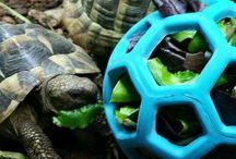 Geraldine / Tortoise stuff