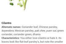 Herbs aromatic