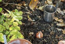 Gardening / by Greta Tarvestad-Bradley