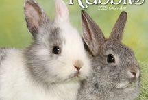 2015 Rabbits CAlendar