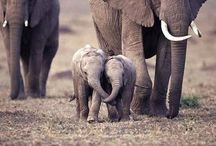 Elephant Obsession / by Melissa Engle