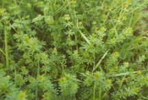 Kreuter und Wildpflanzen
