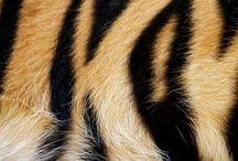 Tiger Skin Art