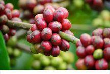 KOPI HITAM / Indonesian Black Coffee Specialist