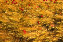Belles des champs / ou Prenons-en de la graine !