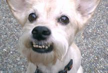 Silly & Wunnerful Dog Stuffs / Fings I finds about doggies wot I finks r cool, cute or just plain funs!