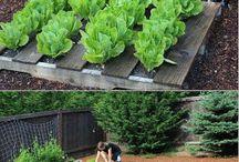 Architektura i ogrody / stajnia , dom, ogród , inspiracje.
