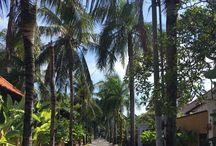 Lost in Bali / BALI - INDONESIA