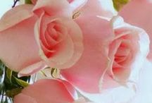 Roese / Roses