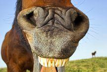 Uśmiech zwierząt