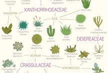 Gardening Infographics and Diagrams