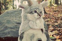 kitties! / by Danielle Valenzuela