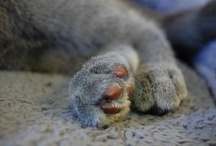 Cat Paws / by TheCatSite.com