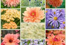 Companion plants for dahlias