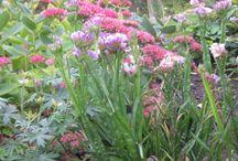 Min have / Billeder fra min hjemmeside om have og planter.