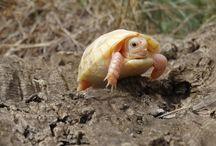 La Vallée des Tortues / The Valley of the Tortoises (http://www.lavalleedestortues.fr/en/)
