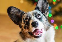 Dog photography / Dog photos by Agata Szymczak