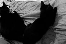 my cats / Black and White  Black  cats