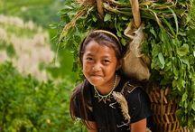 agriculture du vietnam