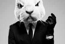 svag rabbit