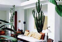 Plants house