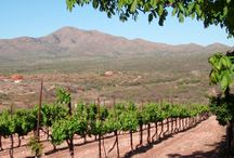 Best Arizona Wineries / Arizona is not traditionally known for its wine producing ability, but it does nonetheless produce some of the finest wine in the country. http://www.kazzit.com/