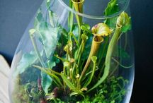 Planten/terrarium