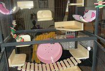 Rattie cages