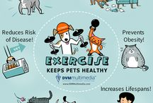 Pet Infographics / Infographics on Pet Care and Safety