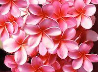 Beatiful flowers / Beautiful flowers