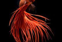 魚 fish