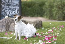 Wedding: Pet Participation / by Dianne J