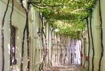 植栽のトンネル