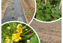 Garden Success / Dedicated to your successful garden.