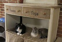 Cats and Their Spaces