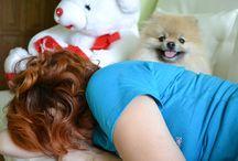 померанский шпиц / Pomeranian, Puppies, Russia