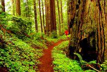 Running Trails