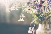 Flowerpower / Flowers