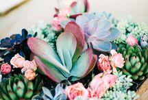 Succulent&Herbs
