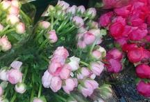 Beautiful Flowers / by Kecia Smith