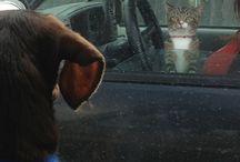 Animals / by krysane schermer
