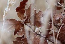 Autumn Brown / by Connie