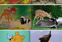 Disney Vs Real Life