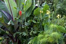 Junglecorner