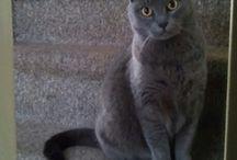 Jip & Grieze / Our cats Jip &  Grieze