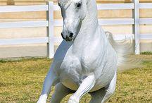 Horses/western art