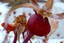 Medicinal, Herbal & Natural