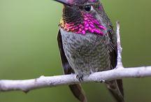 Birds (Kuşlar)