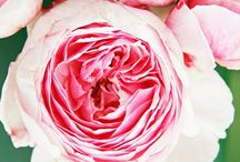 Beautiful Blooms / by Kimarie Henning